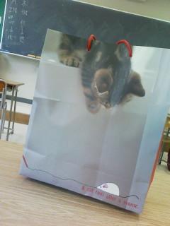 体育着入れてる猫の紙袋♪